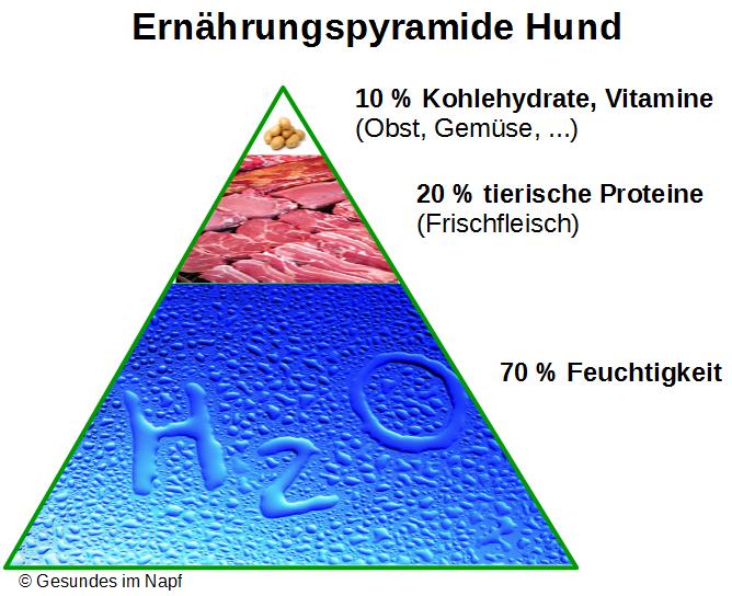 Ernährungspyramide Hund