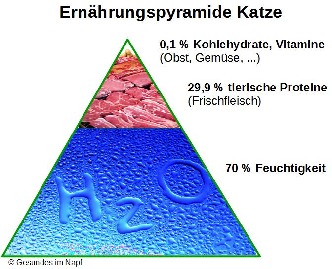 Ernährungspyramide Katze